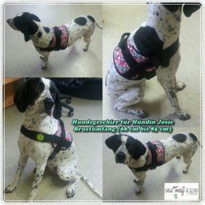 Hundegeschirr Test Schnittmuster