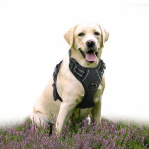 Rabbitgoo No-Pull Hundegeschirr Atmungsaktiv Brustgeschirr für Hunde